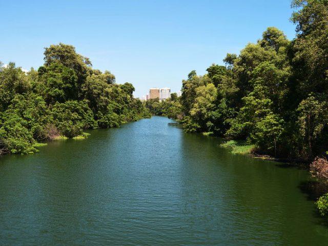 Parque Estadual do Rio Cocó em Fortaleza